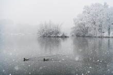 High Angle View Of Ducks Swimming On Lake During Snowfall