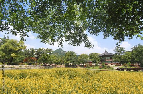 Fotobehang Tuin Scenic view of garden against sky
