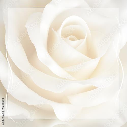 Obrazy w różnych kolorach realistic-ivory-white-rose-background