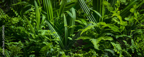 ferns leaves