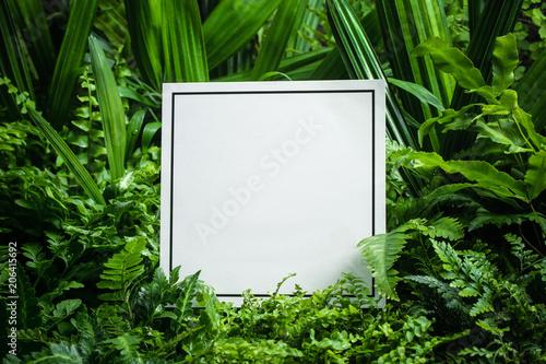 Blank card in fern leaves