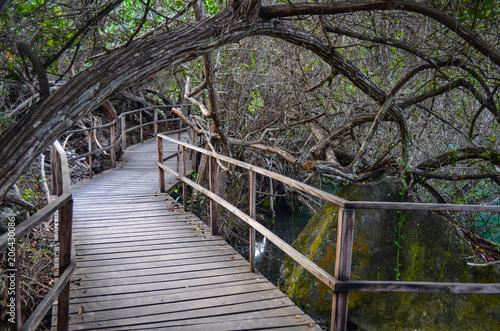 Laguna de las Ninfas, a saltwater lagoon in the town of Puerto Ayora, on Santa Cruz island in the Galapagos Islands Fototapeta