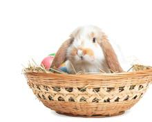 Cute Bunny In Wicker Basket Wi...
