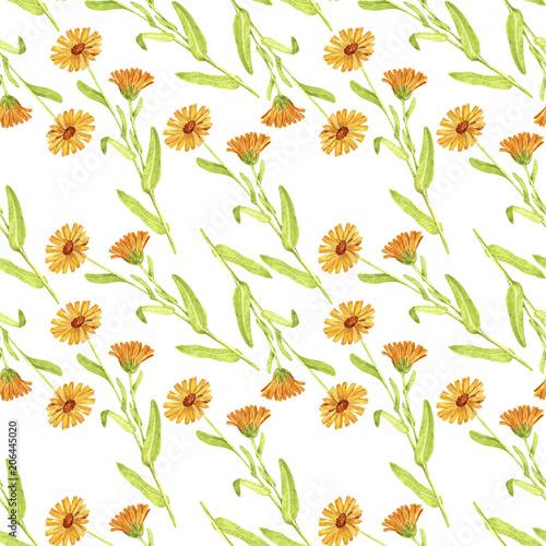 bezszwowy-wzor-z-rysowac-roslina-calendula