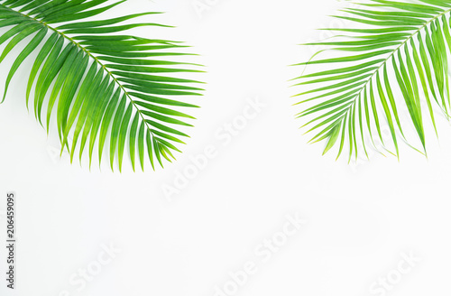 Canvas Prints Palm tree Green leaves palm isolated on white background.