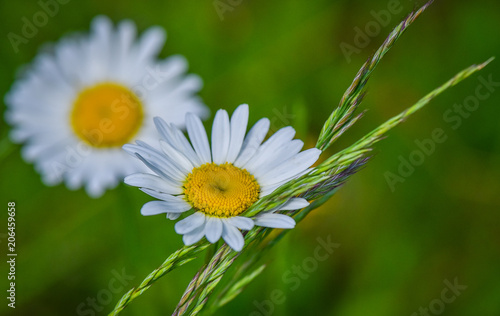 Foto op Canvas Madeliefjes Forest and wild flowers