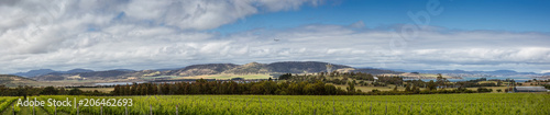 Vineyards in front of Barilla bay in Tasmania Wallpaper Mural
