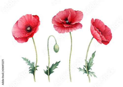 Watercolor illustration of poppy flowers. Perfect for greeting cards or invitations - 206472271