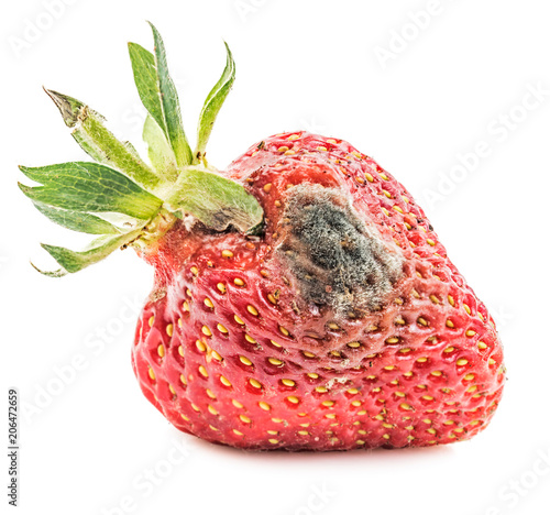 Rotten strawberry isolated Canvas-taulu
