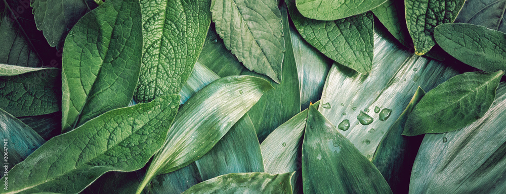 Fototapeta Leaves leaf texture green organic background macro layout closeu