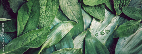 Fotoposter Planten Leaves leaf texture green organic background macro layout closeu