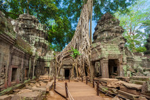 A Wooden Walkway, Platform And Roped Railings Have Been Put In Place To Protect This Impressive Temple Site Of Ta Prohm With The Beautiful Carved Walls, The Collapsed Stones And A Huge Strangler Fig.