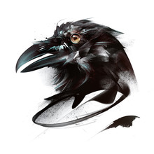 Painted Color Portrait Of Bird Crow On White Background On Side