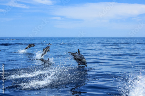 Dolphins jumping in Mexico Wallpaper Mural