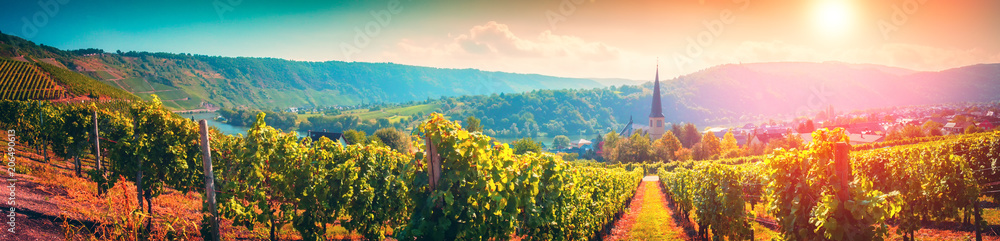 Fototapety, obrazy: Panoramic landscape with autumn vineyards. Mosel, Germany
