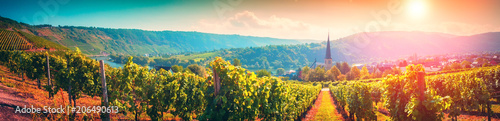 Poster Vineyard Panoramic landscape with autumn vineyards. Mosel, Germany