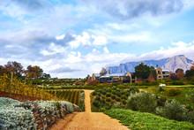 Vineyard Mountains In Stellenbosch Valley South-Africa