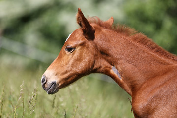 Portrait of a beautiful newborn little horse