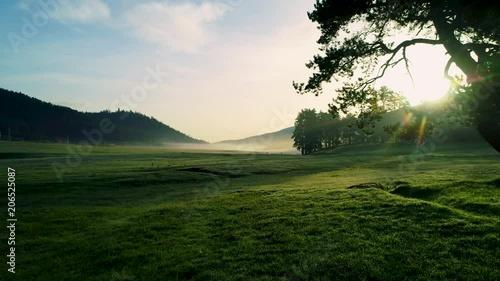 Obraz na plátně  Forest landscape and morning fog in spring