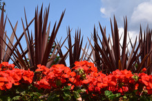 Red Plants And Foliage Against A Blue Sky