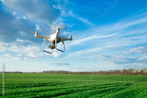 Fototapeta Flying drone above the wheat field obraz