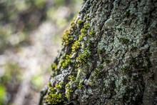 Beautiful Colored Lichen And M...