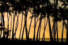 夕暮れの海とヤシの木のシルエット