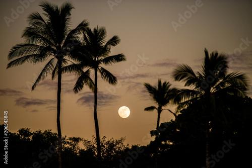 満月とヤシの木のシルエット