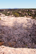Giant Crack In  Cliffside With A Trees Growing In It In The Bears Ears Wilderness Of The Southern Utah Desert