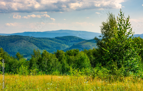 Fotobehang Bleke violet lovely summer landscape in mountains. beautiful scenery with trees behind the field under the cloudy sky