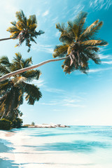 Tropical Beach in Seychelles
