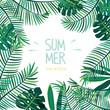 Summer tropical plant illustration