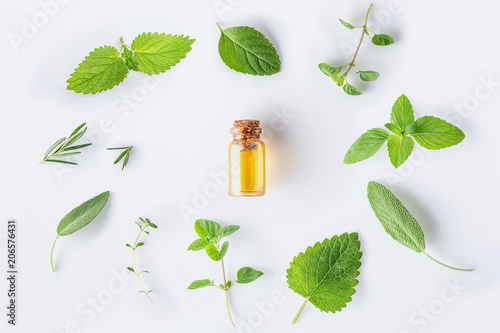 Poster Condiments Collection of fresh herbal sage, rosemary, oregano, thyme, lemon balm spearmint and peppermint setup with flat lay on white background