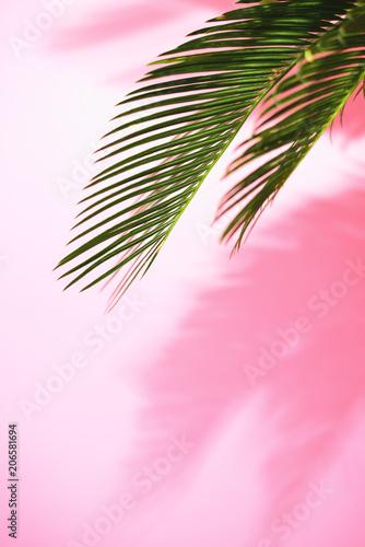 Fototapeta na wymiar Summer tropical sunny background with palm leaves