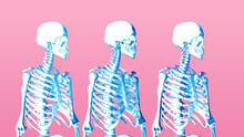 Three Row Human Skeleton On Pi...