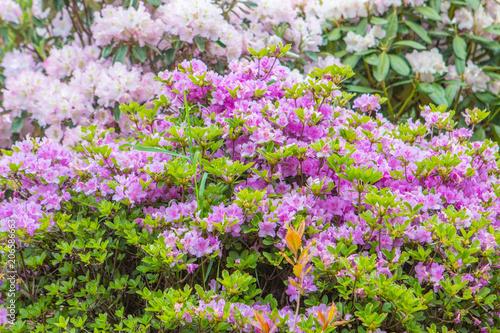 Tuinposter Bloemen Bushes colorful spring flowers.