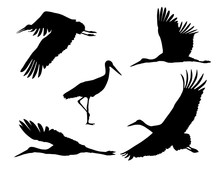 Set Of Realistic Silhouettes Stork Or Heron, Flying And Standing
