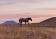 Wild Horse in a Desert Sunset