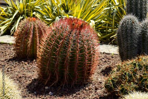 Tuinposter Cactus Jardim de Cactus