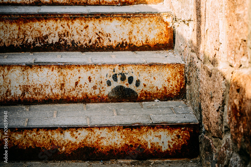Bear footprint on the stairs Canvas Print