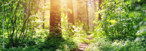 Spoed Foto op Canvas Weg in bos pine and fir forest panorama in spring. Pathway in the park