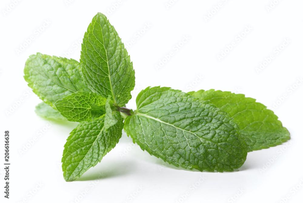 Fototapeta twig of mint leaves isolated on white background