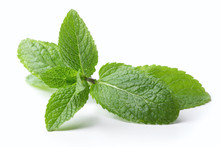 Twig Of Mint Leaves Isolated O...