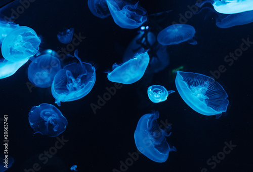 Several jellyfish in a case Wallpaper Mural
