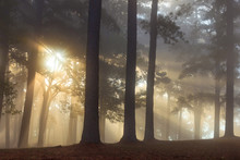 Sunlight Streaming Into Forest