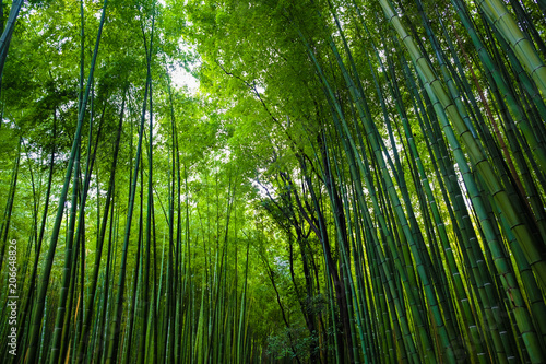 In de dag Bamboo Green bamboo forest travel background at Arashiyama, Kyoto