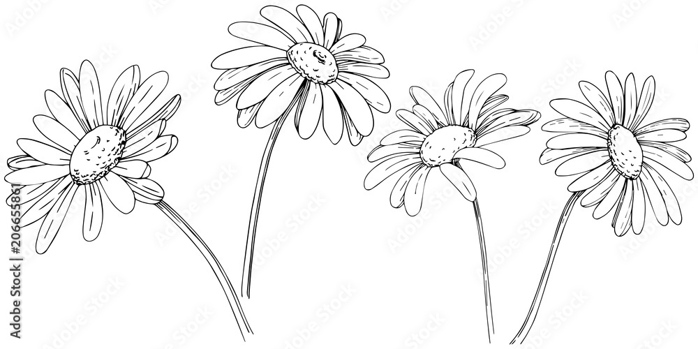 Fototapeta Daisy in a vector style isolated. Full name of the plant: daisy, chamomile. Vector olive tree for background, texture, wrapper pattern, frame or border.