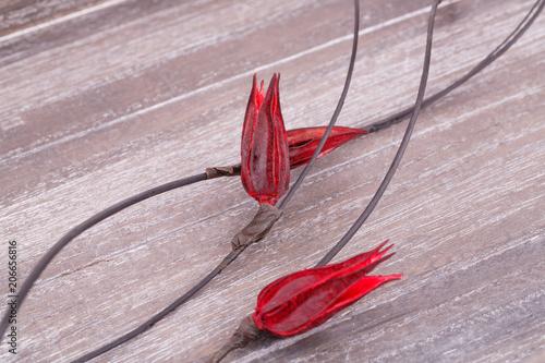 Foto op Canvas Bloemen Dried flowers