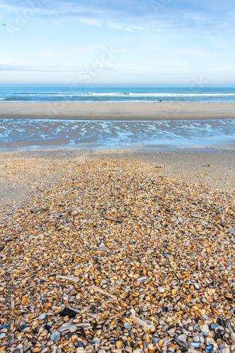Poster Kust sunny deserted beach covered in shells