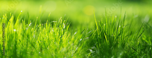 mata magnetyczna Fresh green grass background in sunny summer day